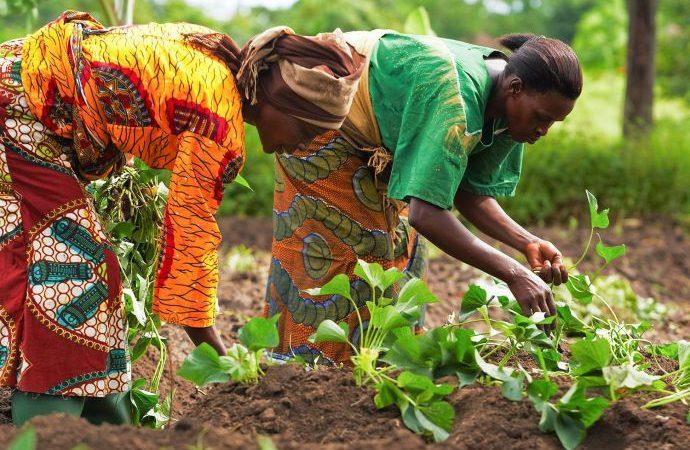 Two women seen farming in Nigeria