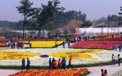 World Tulip Festival is scheduled to start at the Korea Flower Park in Taean