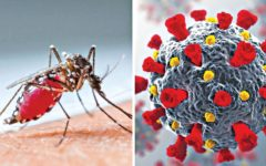 Is the COVID-19 pandemic affecting dengue virus case numbers?
