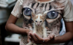 Cuba approves animal rights law after activists' campaign