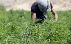 Pakistan sees 'huge potential' in cannabis production